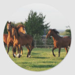 Wild Horse Roundup Sticker