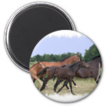 Wild Horses Magnet Magnets