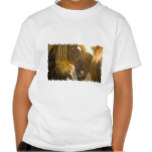 Wild Horses Photo Kid's T-Shirt