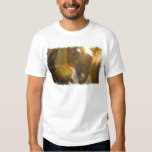 Wild Horses Photo Men's T-Shirt