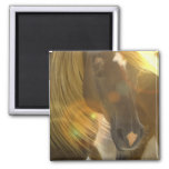Wild Horses Photo Square Magnet