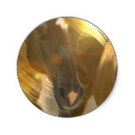 Wild Horses Photo Stickers
