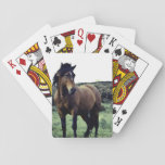 Wild Mustang Deck of Cards