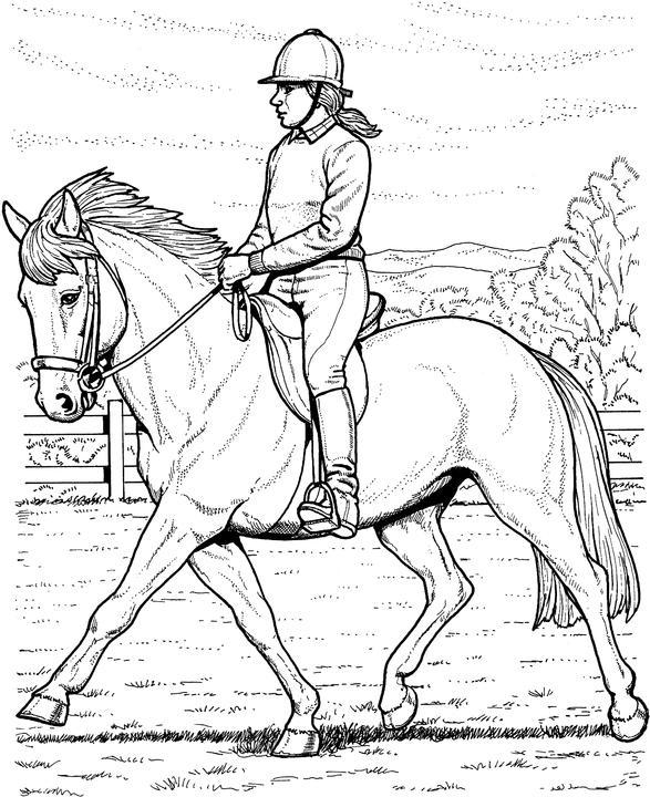 Draft Stallion Lineart by https://rosela-kitsuna.deviantart.com on ... | 720x587